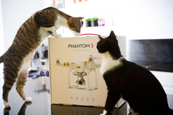 Katten bij Phantom 3