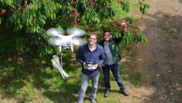 Drone-verjaagt-spreeuwen-uit-kersenboomgaard