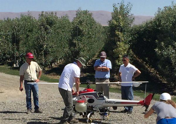 Kersenbomen-drogen-met-drone