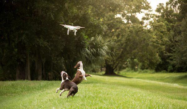 drone-en-honden
