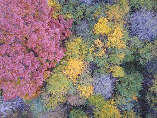herfstbos-van-boven